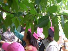 2009.06.07_山梨さくらんぼ狩りバスツアー